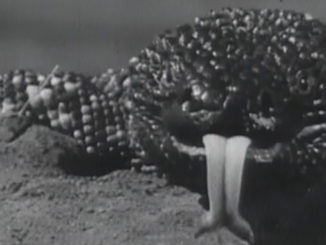 gila-monster-feature