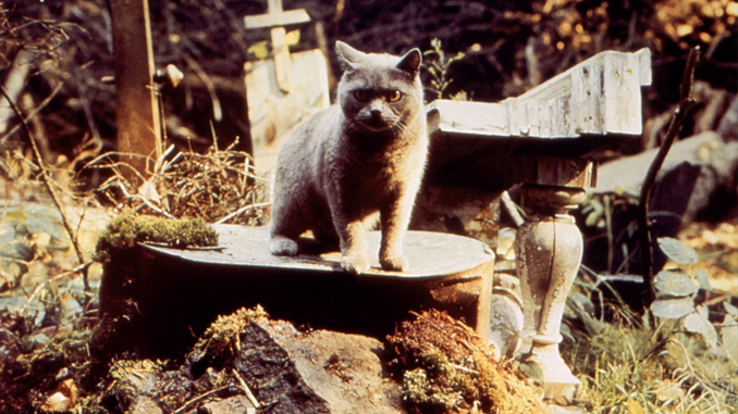 pet-sematary-feature