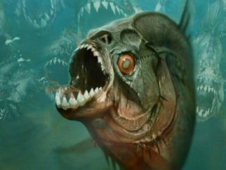 piranha-feature