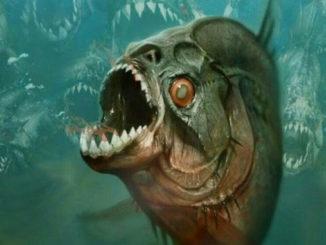 piranha-feature